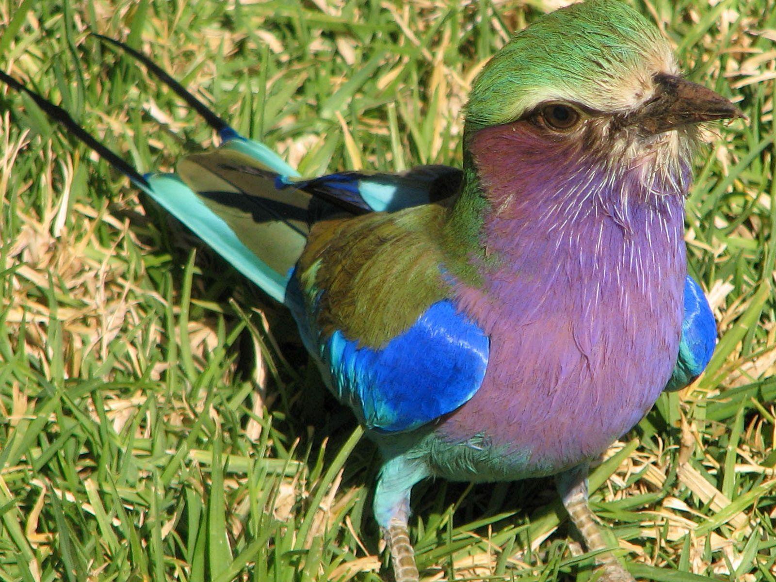 Les oiseaux pictures for Photo oiseau