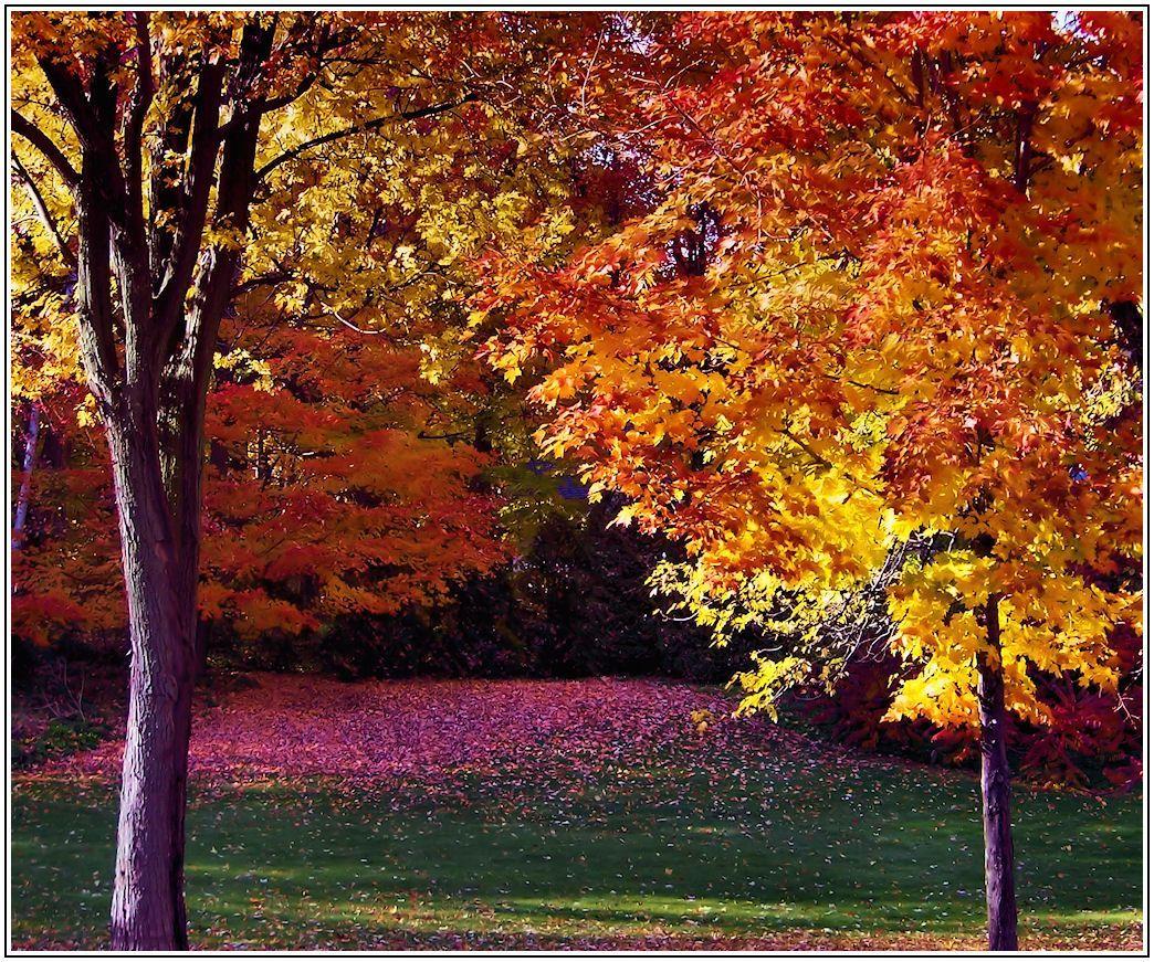 l 39 automne